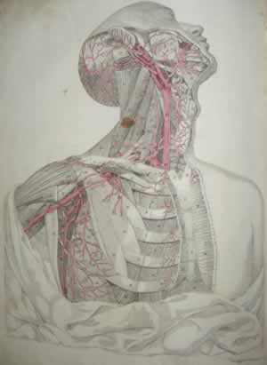 Knox anatomical engravings